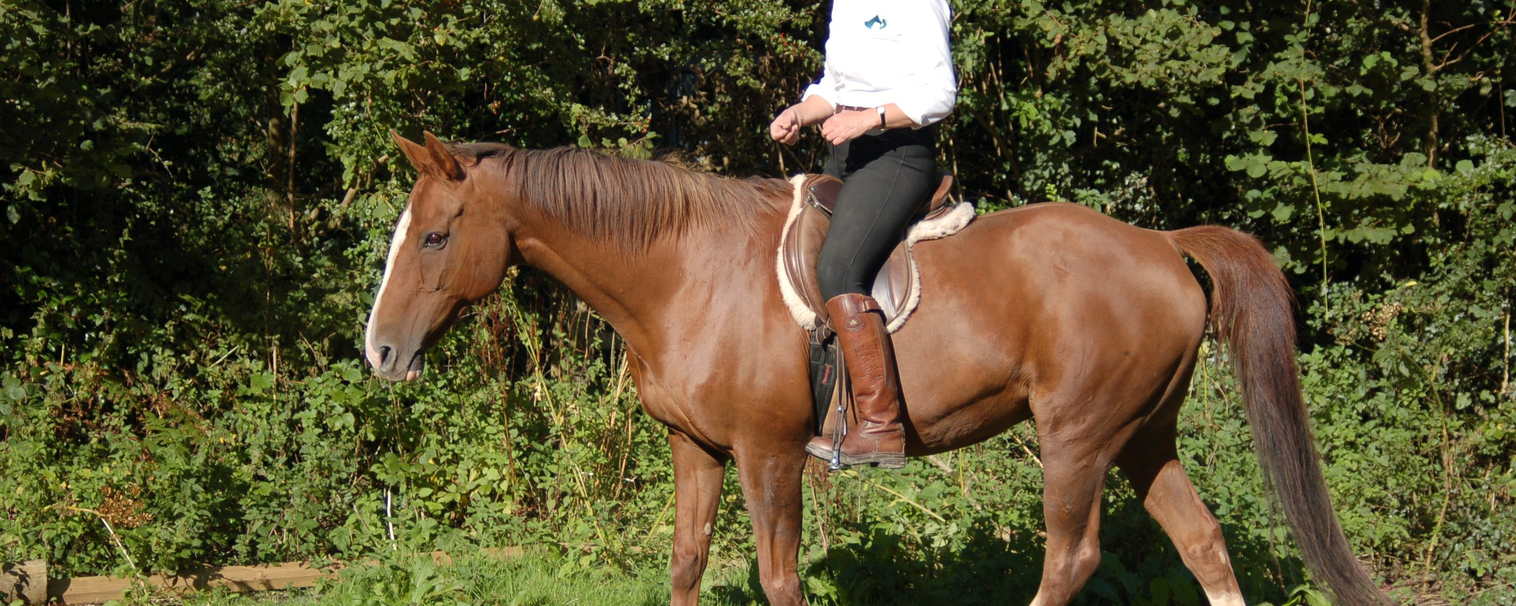 Equagility: riding without a bridle